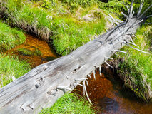 Fallen tree trunk bridge Royalty Free Stock Photo