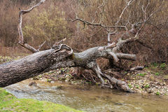 Fallen tree trunk bridging a forest river waterfall. Wet day Royalty Free Stock Image