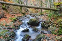 Fallen tree trunk over stream Royalty Free Stock Photos