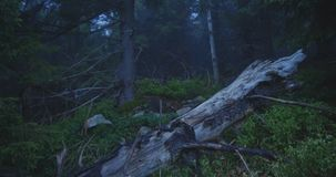 Fallen tree with twisting branches on a forest meadow in slo-mo stock video footage