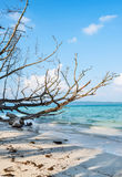 Fallen tree at Vijay nagar beach Stock Image