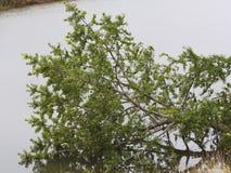 Fallen tree in water Royalty Free Stock Image