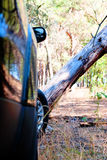Fallen tree on the way a big black car in the woods Royalty Free Stock Photo