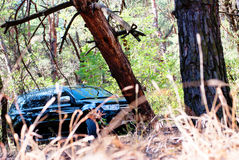 Fallen tree on the way a big black car in the woods Stock Photo