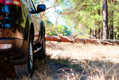 Fallen tree on the way a big black car in the woods Royalty Free Stock Images