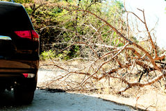 Fallen tree on the way a big black car in the woods Stock Image