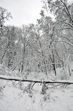 Fallen tree in the winter forest Stock Photography