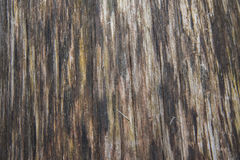 Fallen Tree Wood Grain Texture Vertical Under The Bark Royalty Free Stock Images