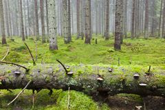 Fallen tree in the woods Stock Images
