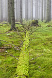 Fallen tree in the woods stock image