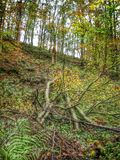 Fallen tree in the woods Stock Image