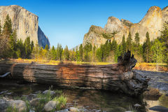 Fallen tree in Yosemite Stock Photography