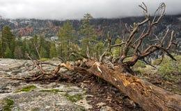 Fallen tree in yosemite valley Stock Images