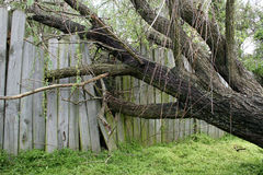 fallen treepil Arkivbilder