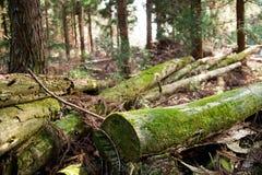 Fallen trees. The fallen trees show enviromantal decison Royalty Free Stock Photos