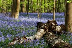 Fallen Trees Stock Photography