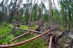 Fallen trees Stock Photos