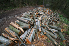 Fallen Trees. Timber stack besides a forest road in a disappearing forest Royalty Free Stock Image