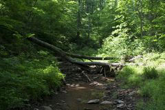 Fallen trees across a stream. Fallen trees form bridges across a small creek flowing through the forest stock images