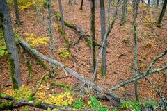 Fallen trees Royalty Free Stock Photo