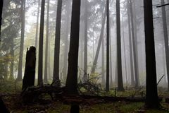 Fallen trees. Awesome mystical forest. Misty morning and fallen trees they give a sense of mystery Stock Photography