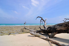 Fallen trees in beach Stock Image