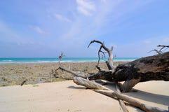 Fallen trees in beach stock image