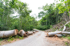 Fallen trees cut to clear path for road through tropical rainforest Royalty Free Stock Photos