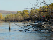 Fallen trees on the Danube. Trees fallen far from the banks of the Danube island. Popular fishing spots for anglers royalty free stock photo
