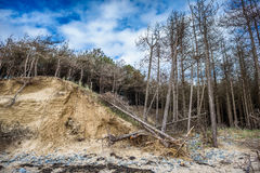 Fallen Trees On Dunes Stock Photography