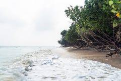 Fallen trees at elephant beach, Havelock. Island, Andaman and Nicobar, India royalty free stock photos