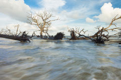 Fallen trees and fast water Royalty Free Stock Photos