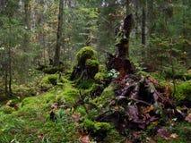 Fallen trees Royalty Free Stock Photos