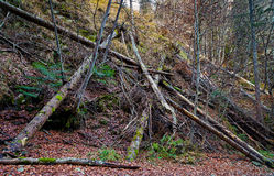 Fallen trees in the forest Stock Photos