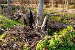 Natural destruction of trees in the forest royalty free stock images