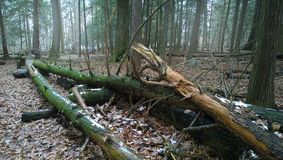 Fallen trees in the woods Royalty Free Stock Photography