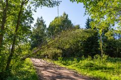 Fallen trees hang on power line after a storm Stock Image