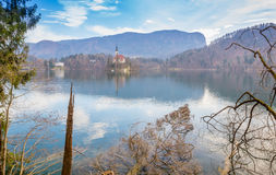 Fallen Trees in Lake Bled Stock Image