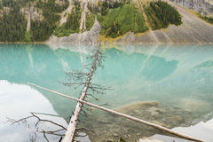 Fallen Trees in Lake Louise Royalty Free Stock Photo