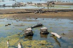 Fallen Trees In Lake Royalty Free Stock Image