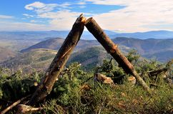 Fallen trees in mountains Stock Photo