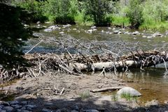 Fallen trees near a mountain stream. Up close Stock Photos