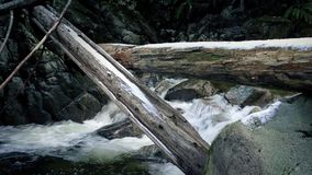 Fallen Trees Over River With Snow On Them. Large logs over icy river in winter wilderness stock video