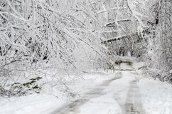 Fallen trees on road in winter snow storm royalty free stock images