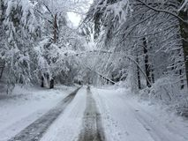 Fallen trees on road in winter storm Quinn Stock Image