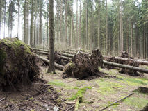 Fallen trees Royalty Free Stock Photography