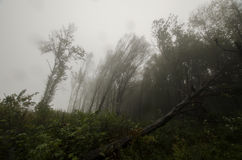 Fallen trees after storm in forest with fog Royalty Free Stock Photo