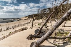 Fallen trees by storm at the seaside stock photos