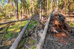 Fallen trees Stock Photography