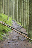 Fallen Trees On Trail, Ardennes, Belgium. Two fallen trees blocking a footpath in the Ardennes near Malmedy, Belgium. Selective focus on the tree trunks Royalty Free Stock Image